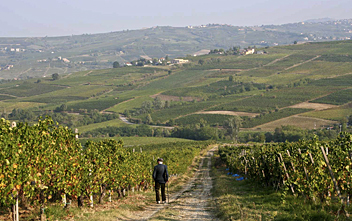 Walking in the vineyards of the Oltrepo Pavese, Lombardy, Italy